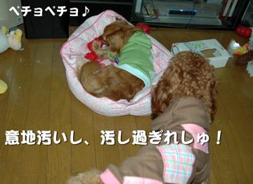 Dsc_0307_2